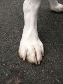 Doggie Paw — Stock Photo