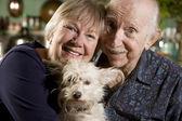 犬と年配のカップルの肖像画 — ストック写真