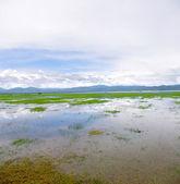 湿地公園 — ストック写真