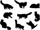 A lot of silhouettes of cats — Stock Photo