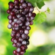 Ripe red grapes on a green background - Stock Photo