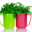 Royalty-Free Stock Photo: Fresh parsley and dill in cups