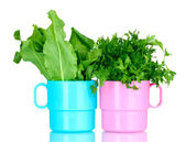 Fresh parsley and sorrel in cups — Stock Photo