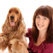 Young brown cocker spaniel and young woman on white background — Stok fotoğraf