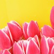 Bouquet of tulips and as a background for post card — Stock Photo #6661395