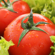 Red tomato vegetables on the green salad background — Stock Photo #6661542
