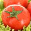 Red tomato vegetables on the green salad background — Stock Photo #6661545