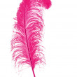 Big pink feather on white background — Stock Photo
