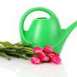 Watering can with tulips isolated on white — Stock Photo