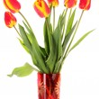 Stock Photo: Red tulips on white background