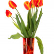 Red tulips on white background — Stock Photo #6661856