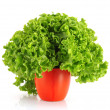 Green lettuce salad isolated on white background - Zdjęcie stockowe