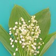 Lily-of-the-valley on blue — Stock Photo #6662418