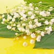 Lily-of-the-valley on yellow — Stock Photo