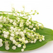 Lily-of-the-valley on white — Stock Photo