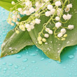 Lily-of-the-valley on blue — Stock Photo