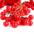 Red berries of viburnum isolate on white - Stock Photo