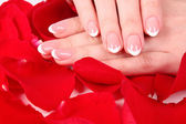 Beaitiful woman hands with manicure on the rose petals — Stock Photo