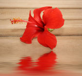 Red tropic flower on the wooden background — Stock Photo