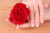 Woman hands with french manicure holding red rose — Stock Photo