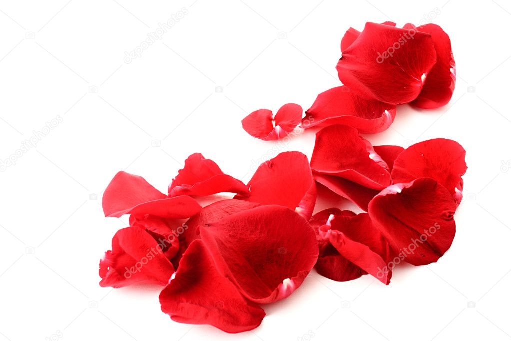 Rose petals as a frame  on white  Stock Photo #6660450