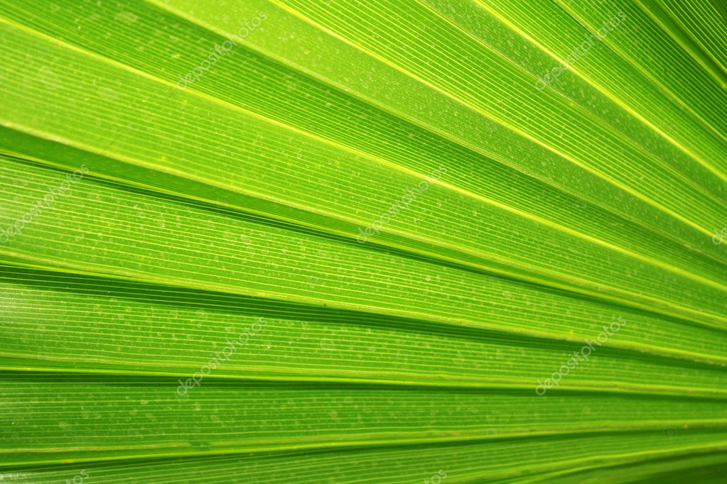 Green palm tree leaf as a background — Stock Photo #6662503