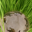 Glass globe in grass — Stock Photo