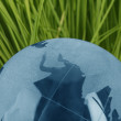 Blue glass globe in grass — Stock Photo
