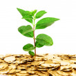 Coin money with green leaf growing — Stock Photo