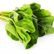 Bunch of spinach isolated on white background — Stock Photo #6677016