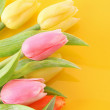 Many colorful tulips on the color background — Stock Photo