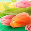 Many colorful tulips on the color background — Stock Photo #6677518