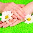 Beautiful woman's hands and flower — Stock Photo