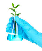Plant in a test tube — Stock Photo
