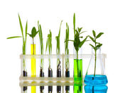 Plant in a test tube isolated on white — Stock Photo