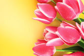 Bouquet of tulips and as a background for post card — Stock Photo