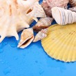 Shells on blue background with water drops — Stock Photo #6685965
