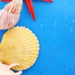 Shells on blue background with water drops — Stock Photo