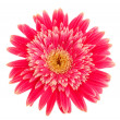 Gerbera flower — Stock Photo #6686065