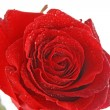 Royalty-Free Stock Photo: Day Valentine red rose and empty space for text