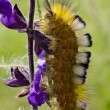 Caterpillar on the flower — Stock Photo