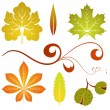 Royalty-Free Stock Vectorielle: Autumn leaves