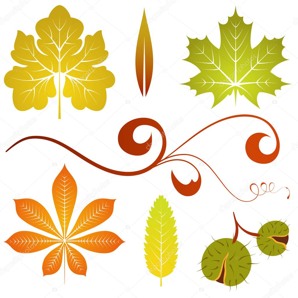 Collect isolated autumn leaves and chestnut, element for design, vector illustration — Stock Vector #6697601
