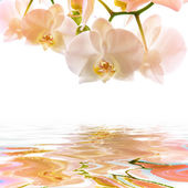 Postcard. orchids on the water — Stock Photo