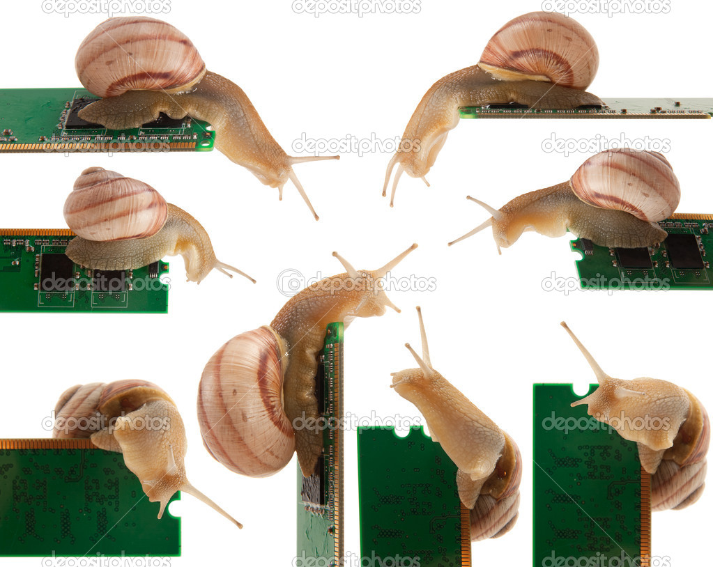 Snail on RAM isolated on a white background  Stock Photo #6688965