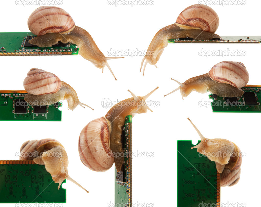 Snail on the RAM for your design, isolated on a white background — Lizenzfreies Foto #6692480