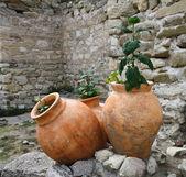 Three old amphorae — Stock Photo