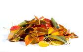 Tas de feuilles — Photo