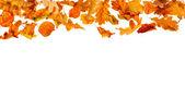 Falling autumn leaves — Stock Photo