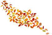 Foglie di autunno pera — Foto Stock